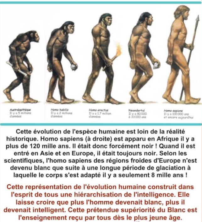 L'évolution de l'homme 2
